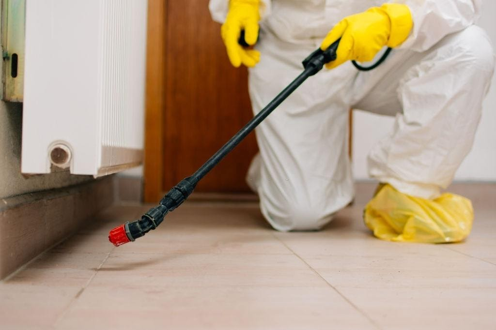 Exterminate the Bedbugs and Get Rid Of them Once and For All!