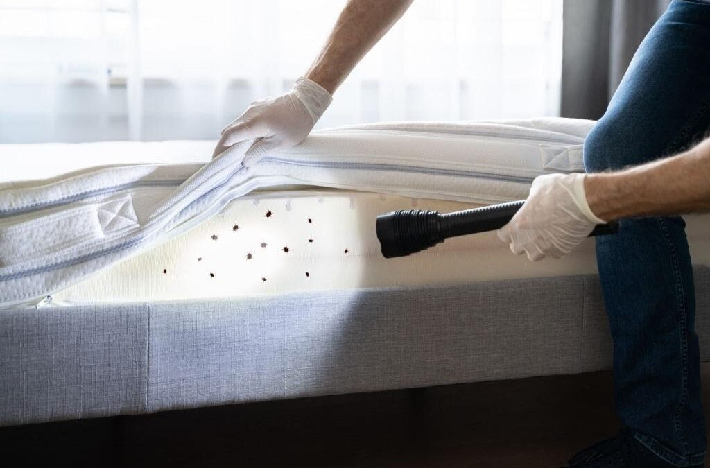 What Attracts Bed Bugs and How to get rid of Them?