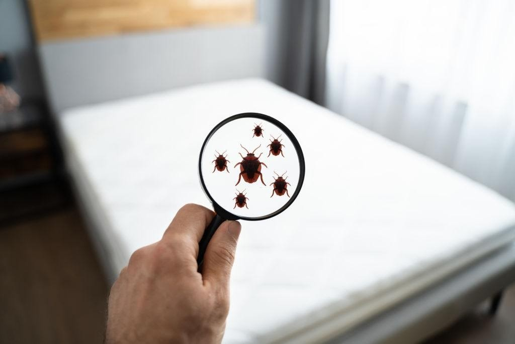 What Attracts Bed Bugs and Insects